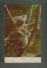 1945 Sydney Australia postcard Cover to New Zealand Koalas