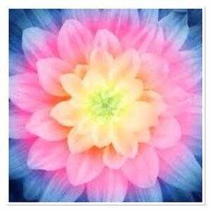 Blossom Wanderlust Digital Print Hoffman Fabric 1 yard