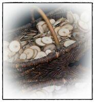 50 + 5 gratis - Astscheiben Baumscheiben Holzscheiben, Deko, basteln, 2 - 5 cm