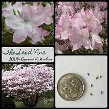 20+ PINK ROYAL AZALEA SEEDS (Rhododendron schlippenbachii) Flower Bonsai Tree