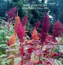 Amaranth -Fall Mix! 50+ SEEDS My Custom Heirloom Blend! COMB. S/H! SEE OUR STORE