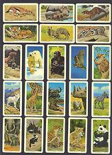 CIGARETTE/TRADE/CARDS.B/Bond Tea.(Canada).ANIMALS & YOUNG.(1972).Full Set of 48.