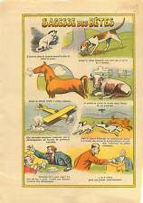 Chat Chien Cheval Vache Chiens Avion Cat Dog Cow Horse Dogs  1936 ILLUSTRATION
