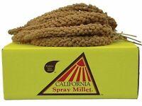 California Golden Spray Millet for Birds 5 lb Box