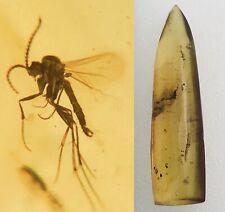 More details for beautiful mosquito in cretaceous burmese amber fossil burmite myanmar .75g *518