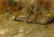Metal Sign Wardle Arthur Study Of East African Leopards A4 12x8 Aluminium