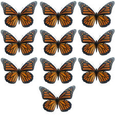 REAL Lot fo 10 Monarch butterfly Danaus plexippus FREE US SHIPPING! Wholesale