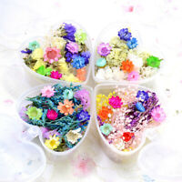 Colourful Dry Flower DIY Nail Art Decor Preserved Flower With Case Jewelry Cr YK