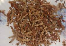 Pine Tea - Organic Dried Buds MIX  - different types of pines 1-3 Oz (30-90 gr)