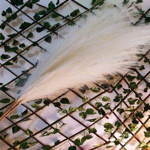 120cm Long White Pampas Grass For Home & Boho Decor   Bundle of 3 Stems of Fluff
