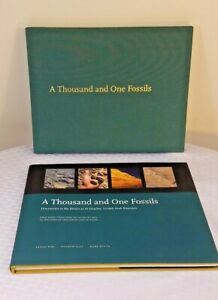 Thousand and One Fossils : Discoveries in the Desert at Al Gharbia, United Ar...