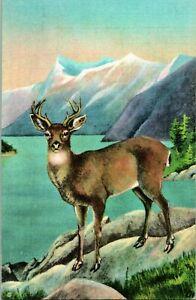 Vtg Linen Postcard Blacktail Deer Sitka American Wild Life of Northwest & Alaska