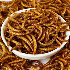 10 LBS Natural Dried Mealworms for Wild Birds Food, Blue Birds, Chickens etc