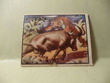 1950 Topps Bring Em Back Alive # 73, Terror of the Jungle Fighting Animals