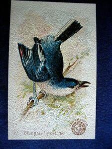 Victorian Trade Card Church Arm & Hammer #27 Fly Catcher BEAUTIFUL Birds C6