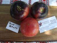 Blue Beauty Tomate - Tomato 10+ Samen - Saatgut - Seeds - Gemüsesamen