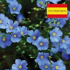Semillas de Flores violetas, Lino 100 semillas