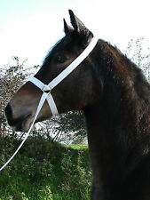 white show halter native ponies adjustable tubular cotton from PLAS EQUESTRIAN