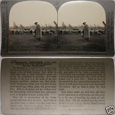 Keystone Stereoview of a Shepherd & His Flock in HUNGARY From 600/1200 Card Set