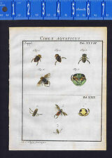 Aquatic Insects Bugs -Rosel Insecten 1761 Engraved Hand Colored Print