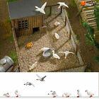 8 Domestic geese - HO/OO gauge Figures & Animals Busch 1195