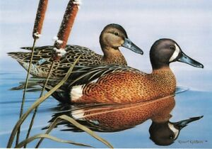 1986 Blue-Winged Teal 4th Pennsylvania Duck Stamp Print 2P1-11