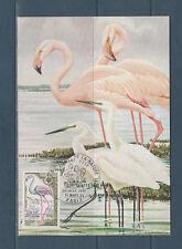 carte  1er jour  nature oiseau flamant rose   75  Paris   1971