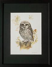 Mochuelo por Joel Kirk, enmarcado Joel Kirk impresión, 12''x16'', Vintage Búho Impresiones