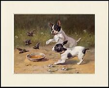 FRENCH BULLDOG PUPPIES CHASE BIRDS CHARMING DOG PRINT MOUNTED READY TO FRAME