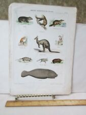 Vintage Print,Mammals,19th Century,French,Hand Color