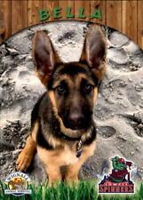 2017 Lowell Spinners Wignall Animal Hospital Sga . Pick Your Dog