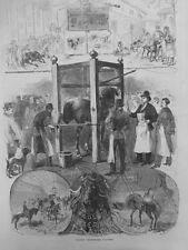 1877 I1711 ÉCOLE VÉTÉRINAIRE ALFORT ANIMAUX CHEVAUX MANÈGE HYDROTHÉRAPIE CHENIL