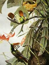 Alfred Brehm 1913 PRACHTELFE BIRD NEST  Antique Print Matted