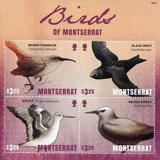 Montserrat 2016 MNH Birds of Montserrat 4v M/S Swifts Willet Brown Noddy Stamps
