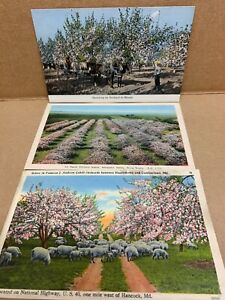 Early 1900's Antique RPPC Postcards Orchard Apple Blossoms Spraying Horse Wagon