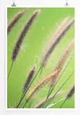 60x90cm Naturfotografie – Schilfrohr im Grünen