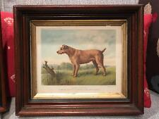 Irish Terrier Vero Shaw Dog Chromolithograph Cassell's London 1881 Period Frame