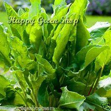 SORREL Rumex acetosa app. 2500 seeds 3g/0,10oz herb vegetable