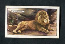 1937 Gallaher Ltd Cigarette Card: Wild Animals: No 7: The African Lion