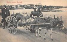 WASHER WOMAN DONKEY CART BERMUDA POSTCARD (c. 1910)