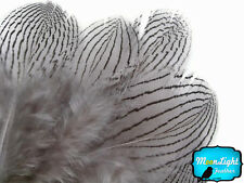 1 Dozen Gray Silver Pheasant Plumage Barred Feathers Fly Tying Jewelry Costume
