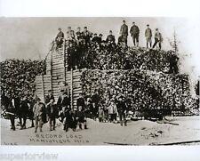 Old Time Logging Vintage Lumbering Worlds Record Load of Logs Manistique MI LOOK