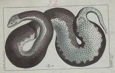 Original-Kupferstiche (1800-1899) aus Afrika