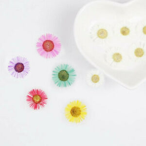 12X Real Echinacea Dried Sun Flower Pressed For Resin Jewellery DIY Making Craft