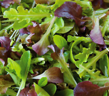 LETTUCE 'Mixed' 300+ Seeds Gourmet lettuce EASY and Quick to grow