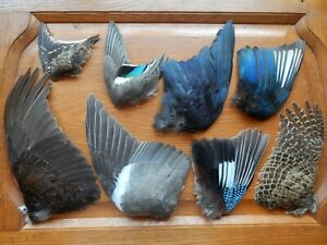 8 Mixed Dried Wings Bird Wings Fly Tying Arts Crafts Feathers
