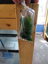 Aquarium live Plant Java Moss