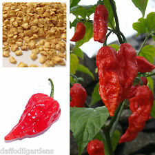 Hot Chilli Pepper * Red Bhut Jolokia * Ghost Chilli Seeds 30 Seeds