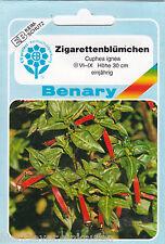Zigarettenblümchen Köcherblümchen Cuphea ignea ca 50 Pflanzen Benary Samen
