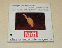 Diapositive MILLIAT Frères Pâtes - Série ANIMAUX N° 103 Grande Aigrette - PRIME